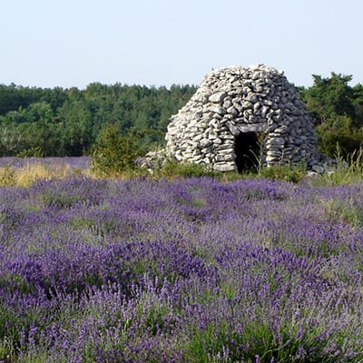 Provence_Luberon_Lavendel
