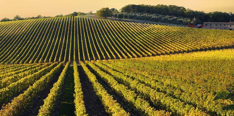 Vandringsresorna i Toscana går bland annat genom vackra Radda in Chianti.