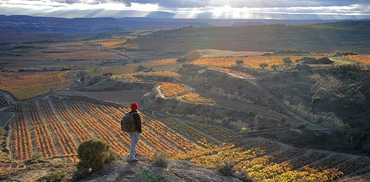 Vy La Rioja vinodlingar vid Pilgrimsvandring