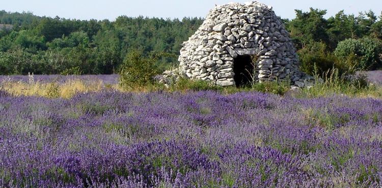Lavendelfält i Luberon