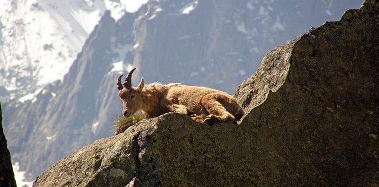 Bergsget_Tour_Du_Mt_Blanc