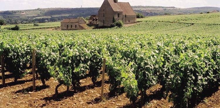 Vinodling-Frankrike
