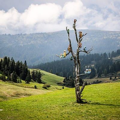 Färgglada fåglar i Dolomiterna