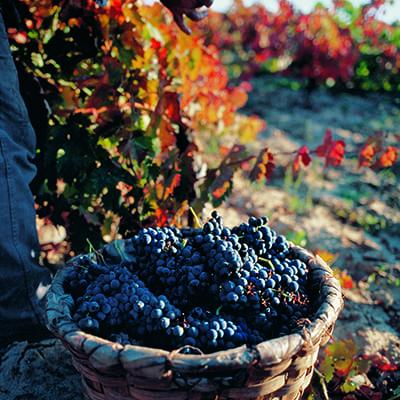 Vindruvor-Rioja-vandring