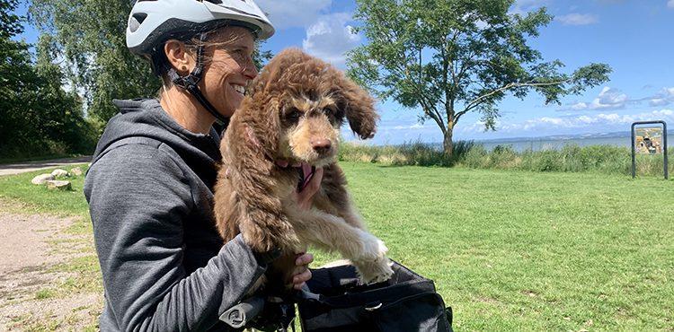 Cykelsemester med hund